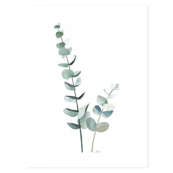 Lilipinso Poster Eucalyptus zartgrün
