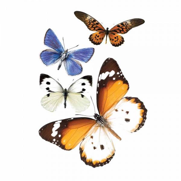 Kek Amsterdam Wandsticker Set 2 Schmetterlinge