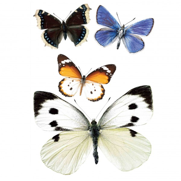 Kek Amsterdam Wandsticker Set 3 Schmetterlinge