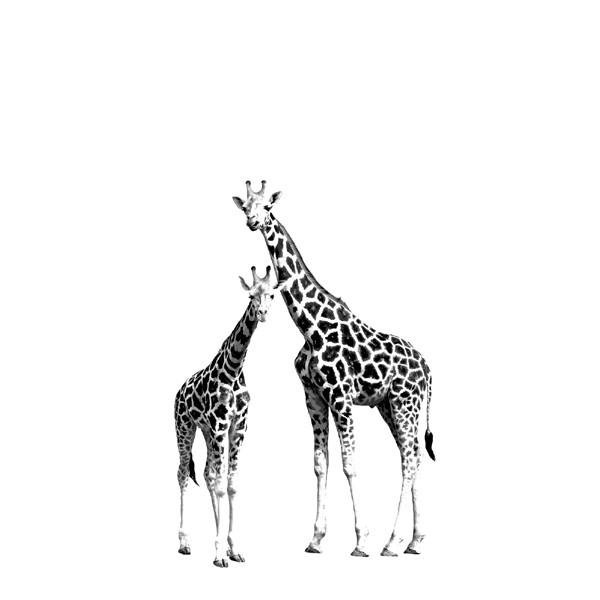 Rasch Textil Everybody Bonjour Wandbild Giraffen