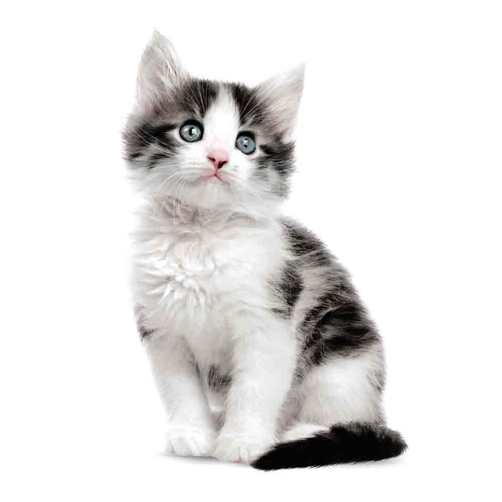 Brilliant Wandtattoo Katzen Ideen Von