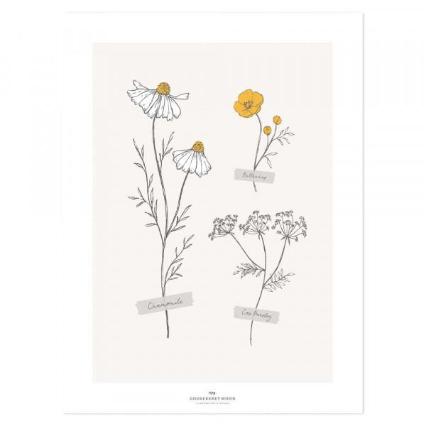 Lilipinso Poster Herbarium mit Kamille grau senfgelb