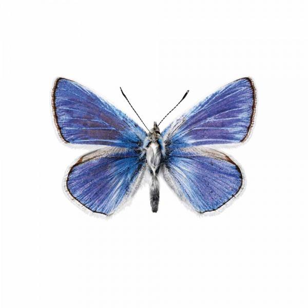 Kek Amsterdam Wandsticker Schmetterling 959